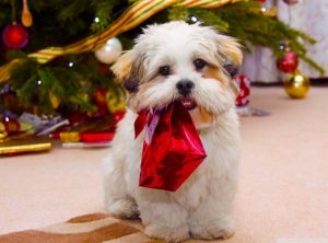 cute_dog_christmas-wallpaper