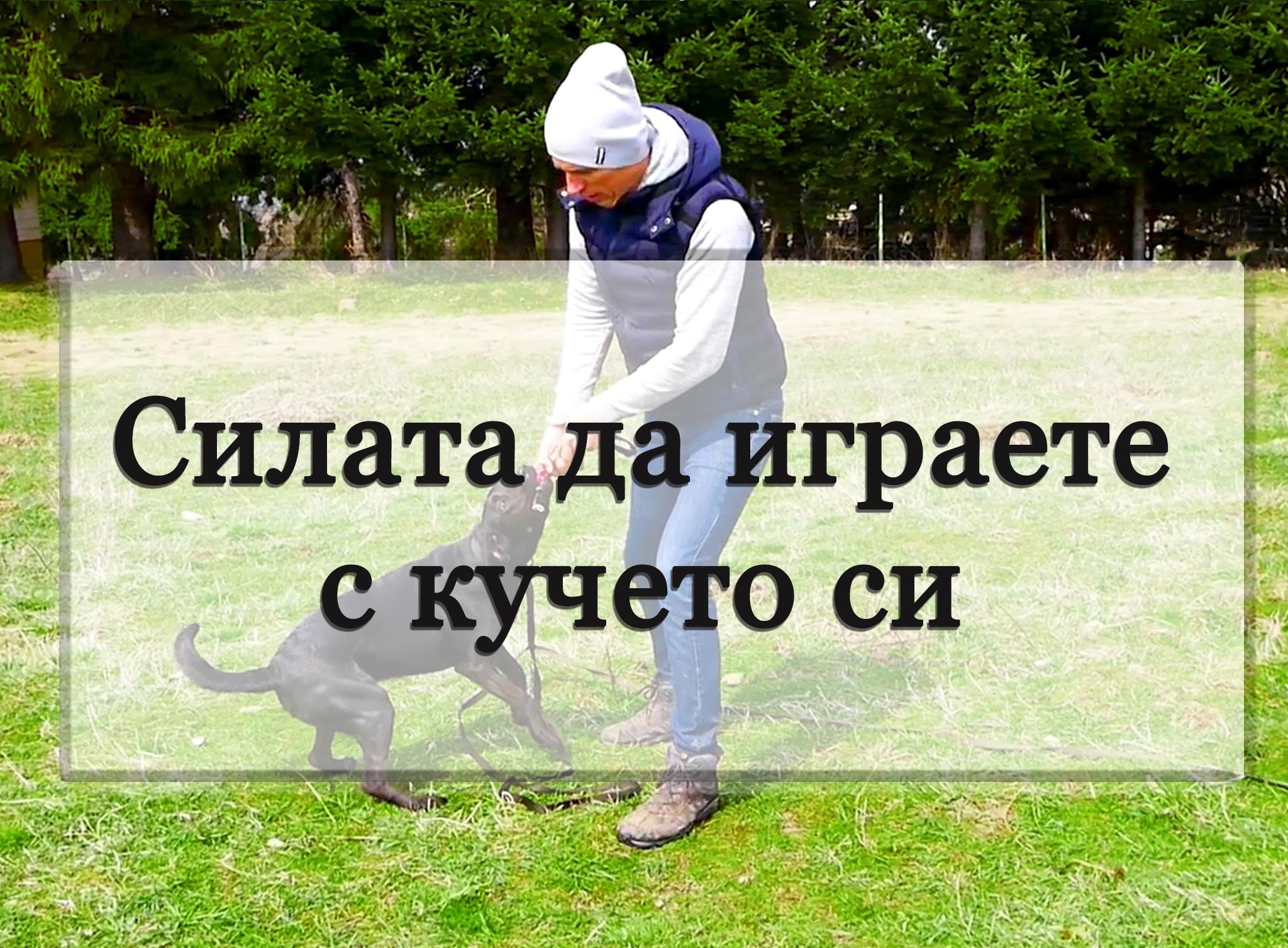 Силата да играете с кучето си